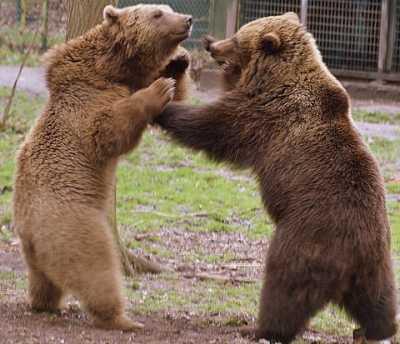 Kerstmis, vrede of beren op je weg? Zo voelt het goed.